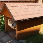 Výroba psí boudy na klíč